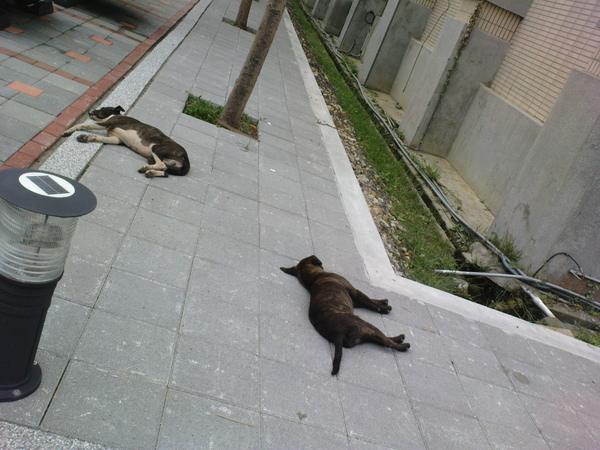 兩隻睡的正沈的狗兒
