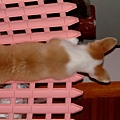 像貓的背影-3.JPG