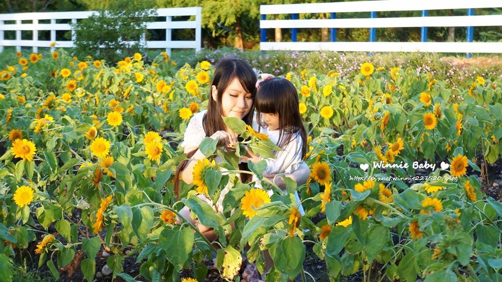 大屯山花卉農場 (15).jpg