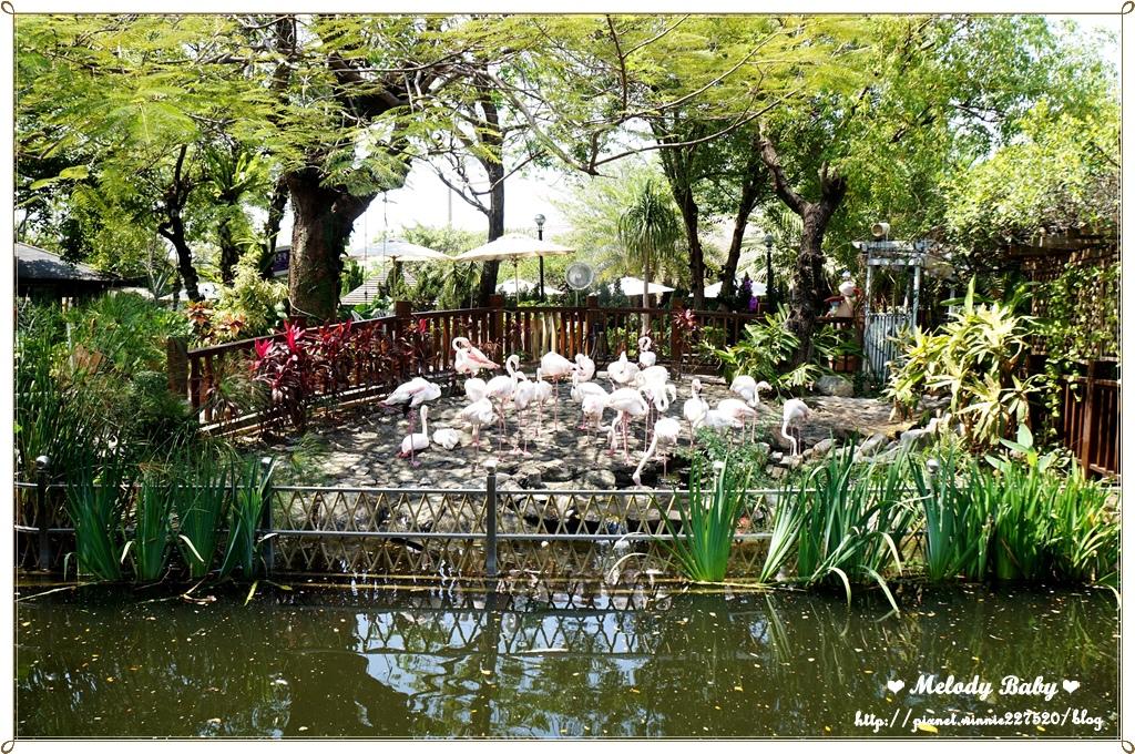 淨園農場 (11).JPG