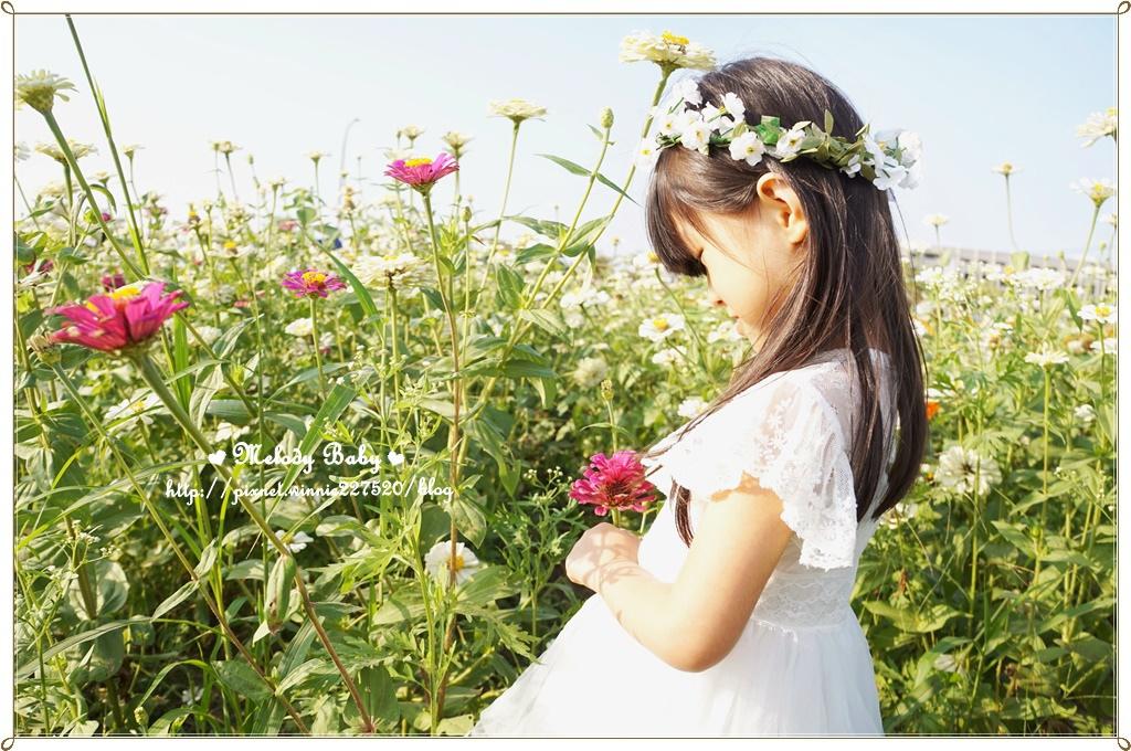 橋頭花海 (8).JPG