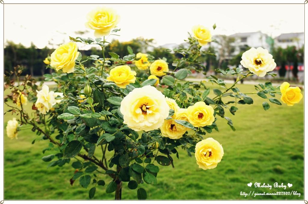 蘿莎玫瑰莊園 (5).JPG