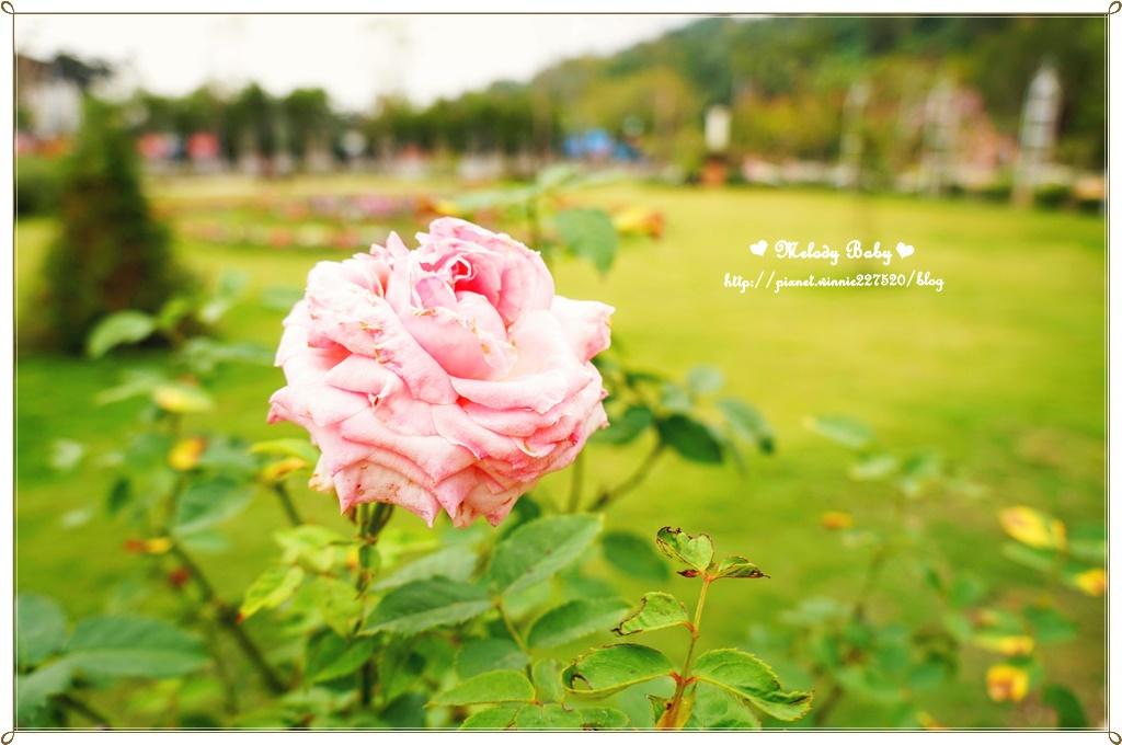 蘿莎玫瑰莊園 (7).JPG