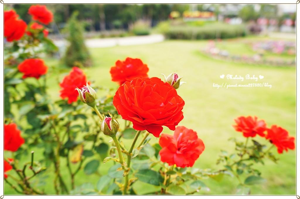蘿莎玫瑰莊園 (8).JPG