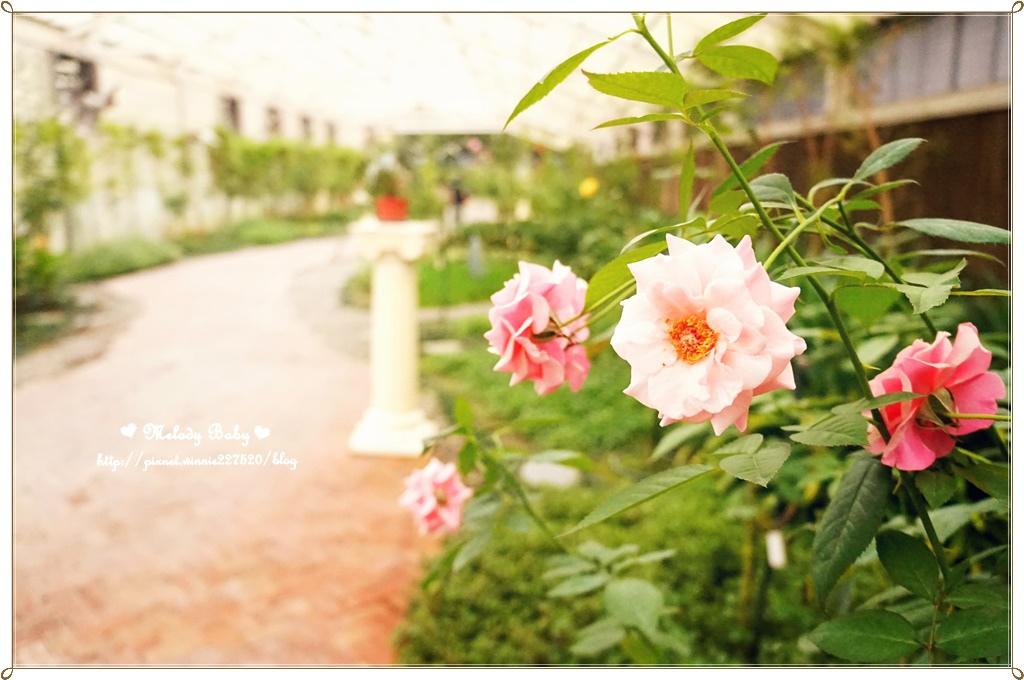 蘿莎玫瑰莊園 (39).JPG