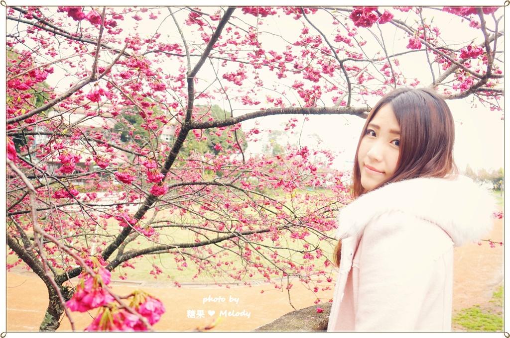 清境普羅旺斯玫瑰莊園 (42).JPG