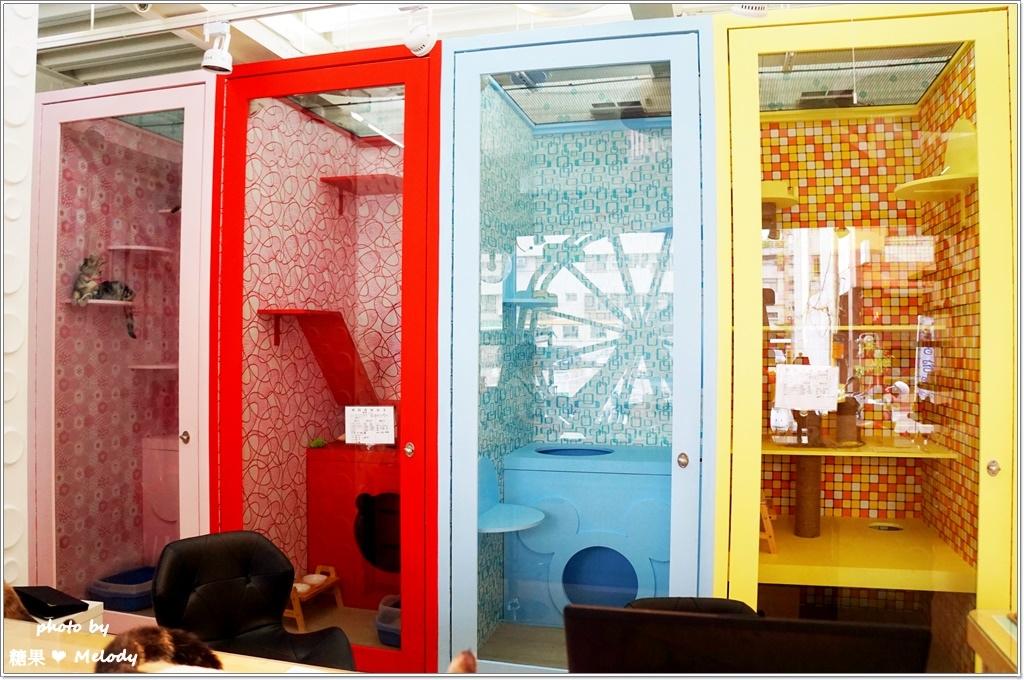 台中貓旅館-主題房型