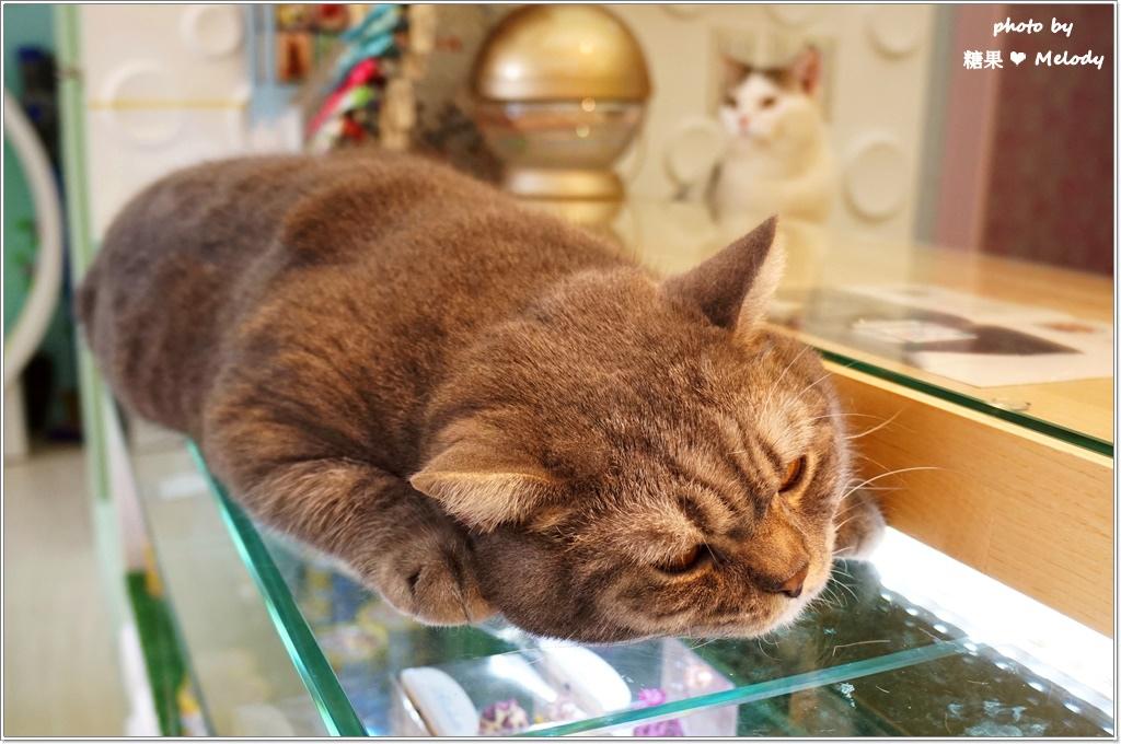 台中貓旅館-櫃台一隅