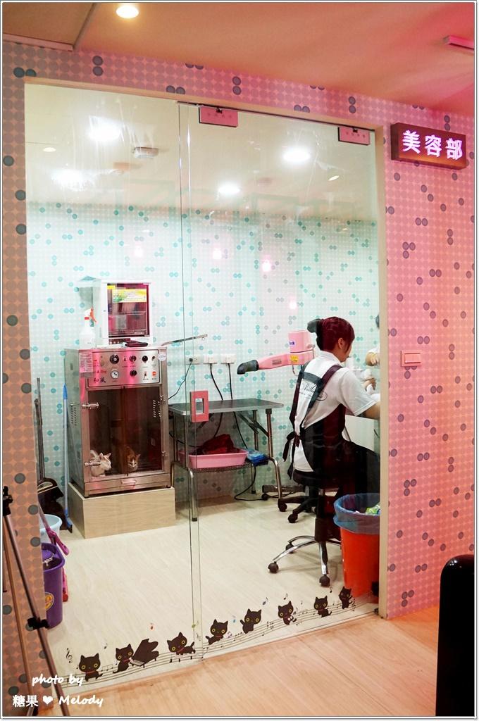 台中貓旅館-美容室