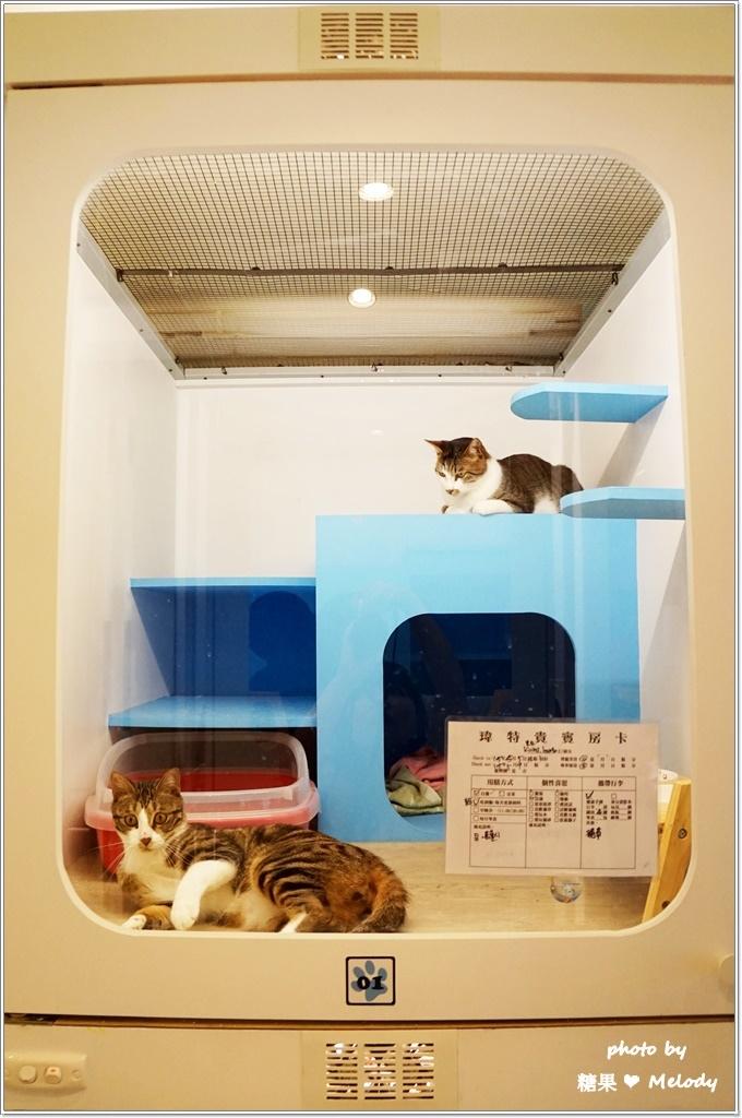 台中貓旅館-經濟房型近照