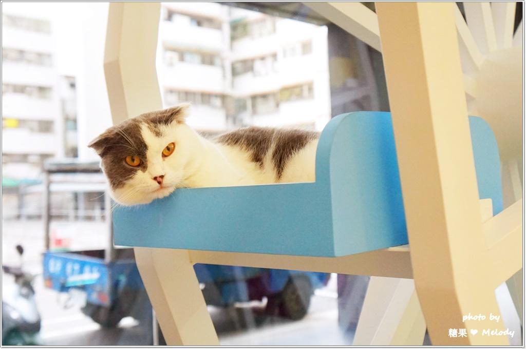 台中貓旅館-摩天輪一隅