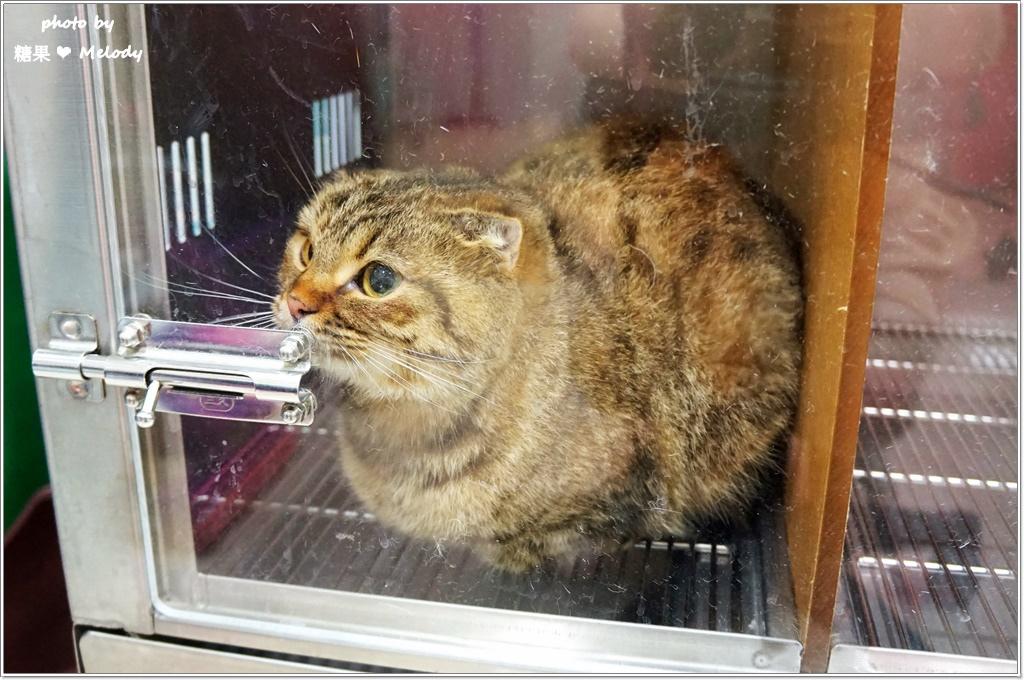台中貓旅館-美容體驗服務