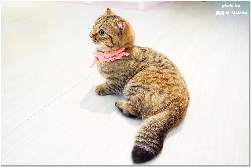 台中貓旅館-完成美容的寶貝