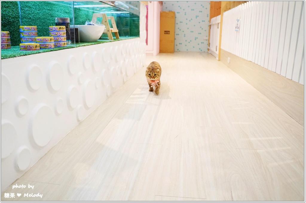 台中貓旅館-放風時間