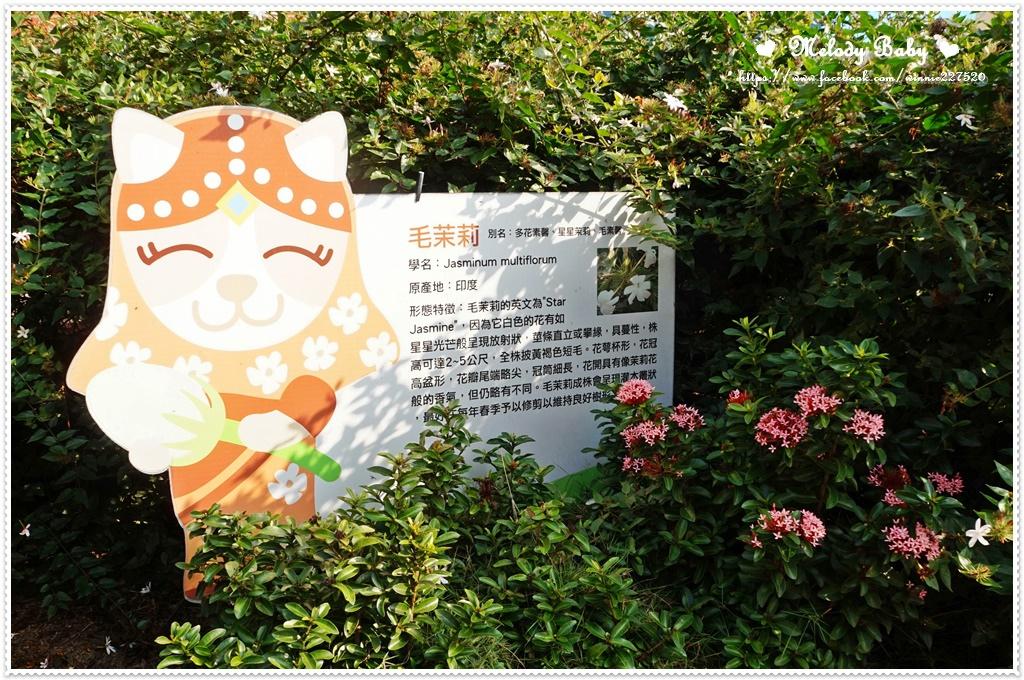 茉莉花壇夢想館 (5).JPG