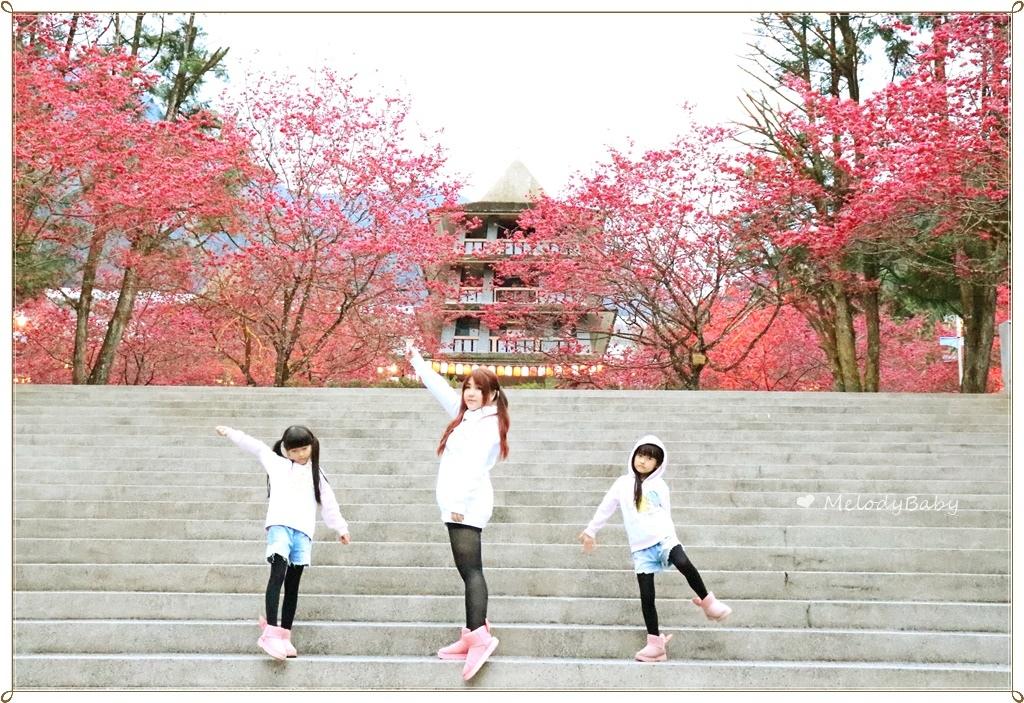 九族櫻花祭 (18).JPG