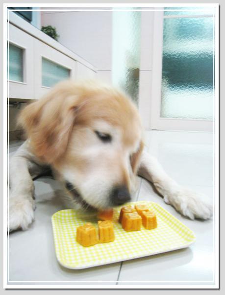 小麥吃月餅17.jpg