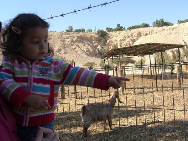 Puppy 雅逛動物園8
