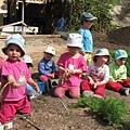 這是姐姐幼稚園種的蔬果