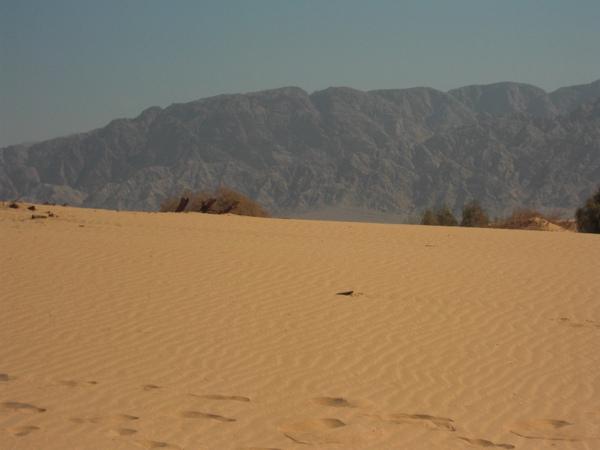冬天的沙丘玩耍3