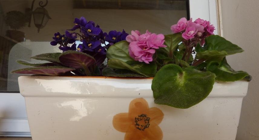2011_05_01_flowers 002.jpg