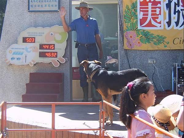 清境-來自紐西蘭的牧羊人和牧羊犬