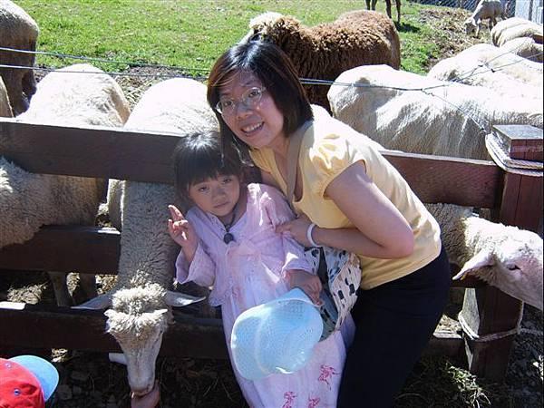 清境-敏敏被推去和羊照相