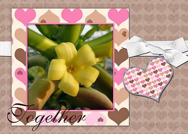 木瓜花.jpg