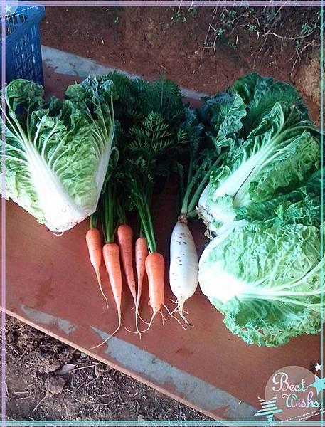 有機青菜2.jpg