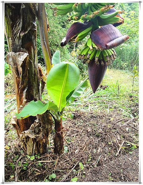 天然堆肥2.jpg