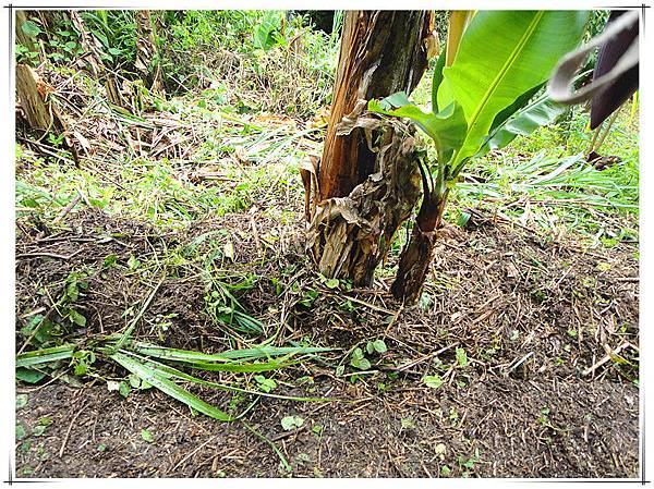 天然堆肥4.jpg