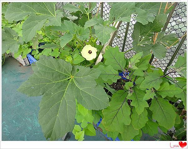 自種有機蔬菜.jpg