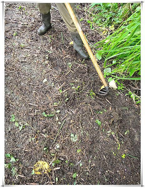 雜草下的黑金2.jpg