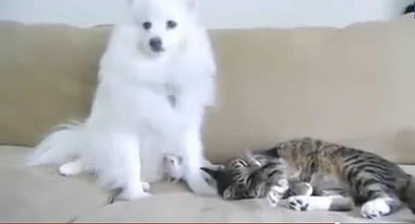 貓狗刺蝟一家親