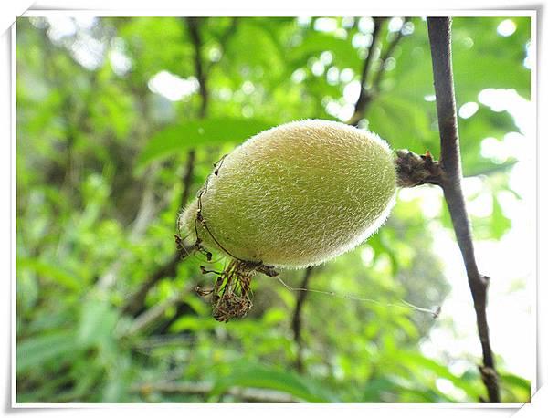 有機小蜜桃3.jpg