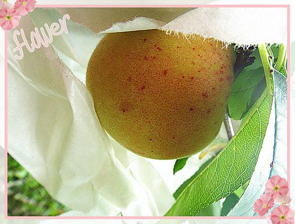有機水蜜桃.jpg