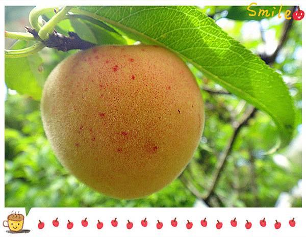 有機水蜜桃3.jpg