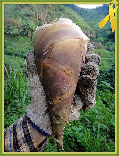有機綠竹筍