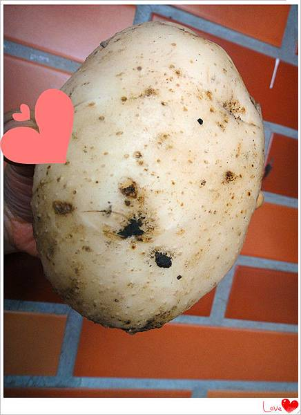 有機馬鈴薯.jpg