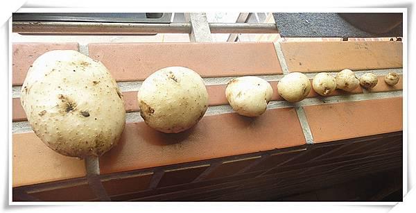有機馬鈴薯2.jpg