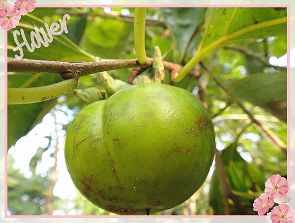 有機柿子2.jpg