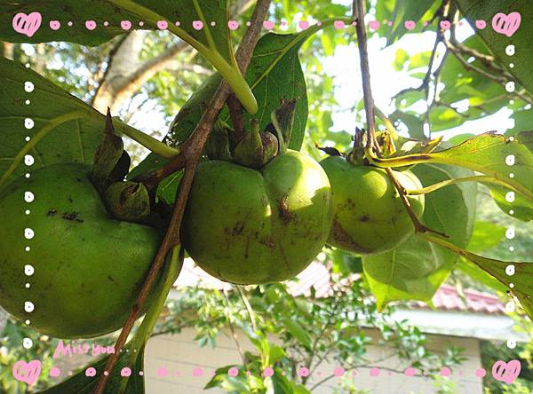 有機柿子4.jpg