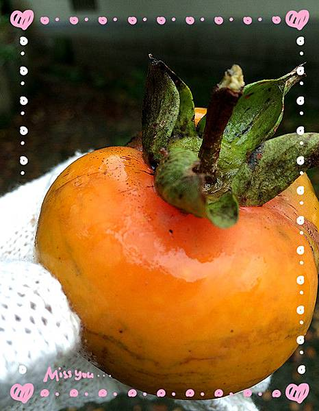 有機柿子9.jpg