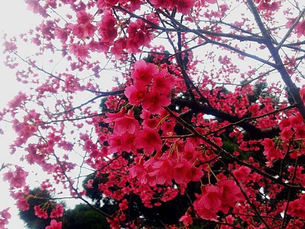 2015-03-05-21-20-30_deco