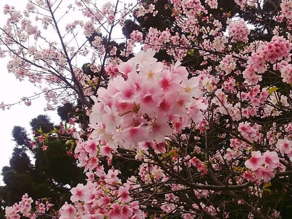 2015-03-05-17-21-50_deco