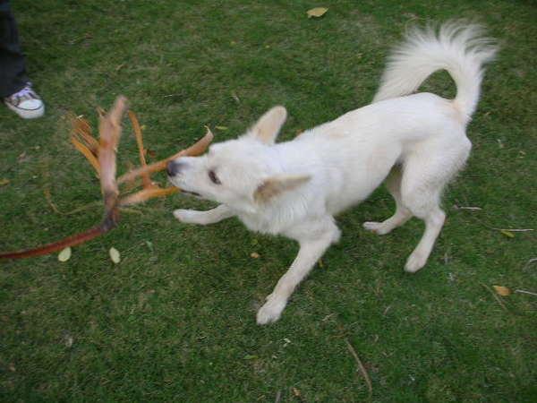 不知哪來的狗~小R和牠玩