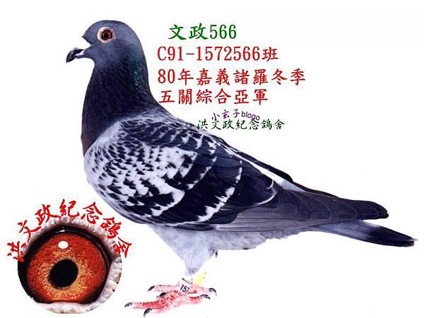 1572566