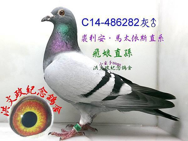 486282