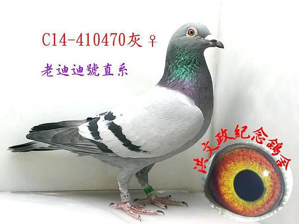 410470(1).jpg