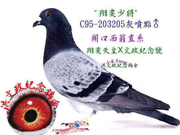 203205